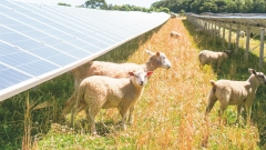 Agricultral Solar Mounting System